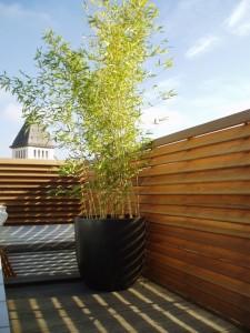du bois sur les toits arborescence paysage. Black Bedroom Furniture Sets. Home Design Ideas