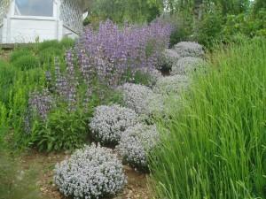 Talus caillouteux composés de plantes aromatiques bien adaptées à ce milieu