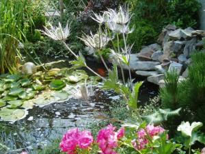Eryngium surplombant un bassin