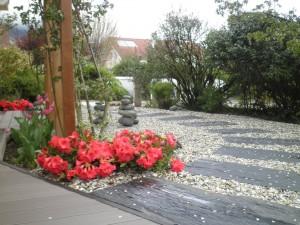 Rhododendron nain enfin en fleurs !
